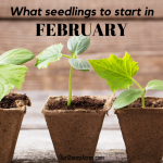 Seedlings to plant in February