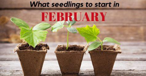 What Seedlings To Start In February