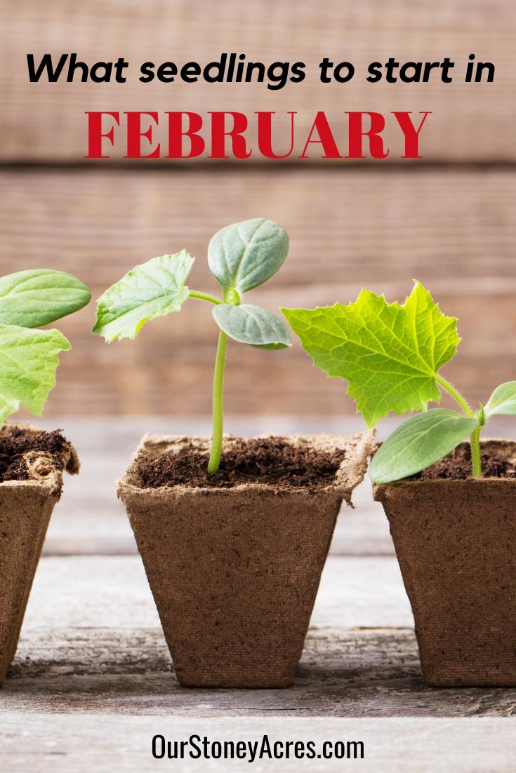 Seedlings to start in February