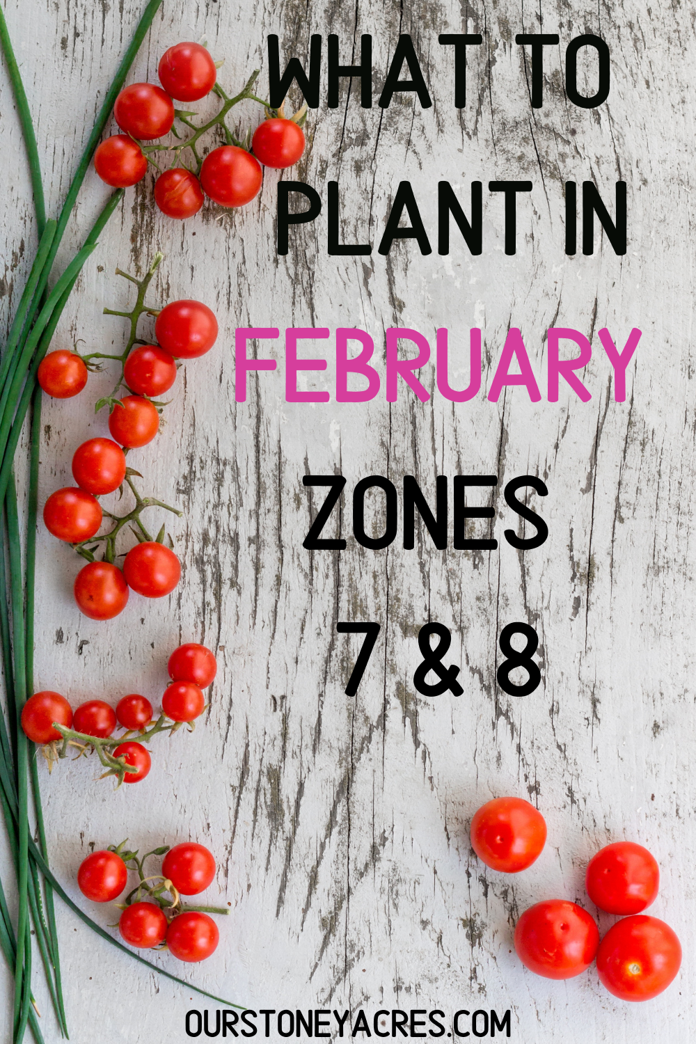 What to plant in February Zones 7 &8