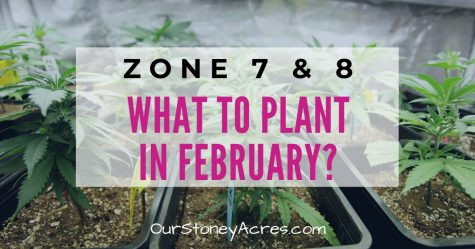 What to plant in February Zones 7 and 8
