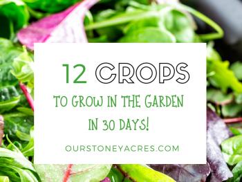 12 quick-growing vegetables