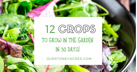 12 quick-growing vegetables