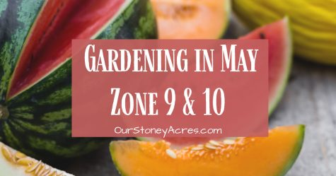 What to plant in May Zones 9 and 10