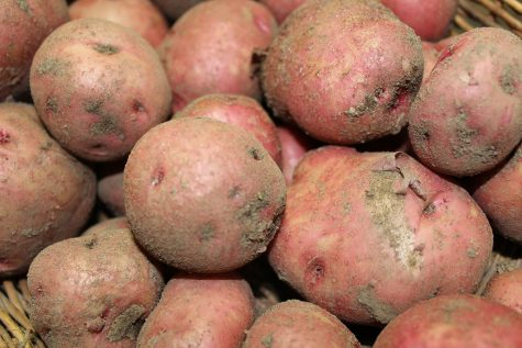 Get some potatoes planting in April