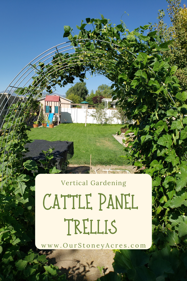Cattle Panel Trellis
