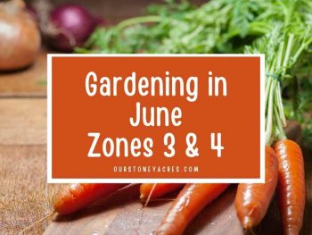 What to Plant in June Zones 3 & 4