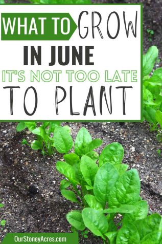 What can you grow in June