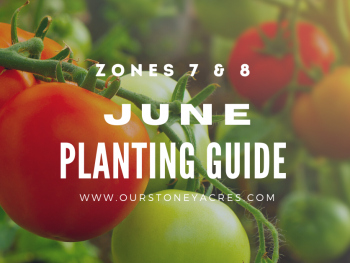 June Planting List Zones 7 and 8