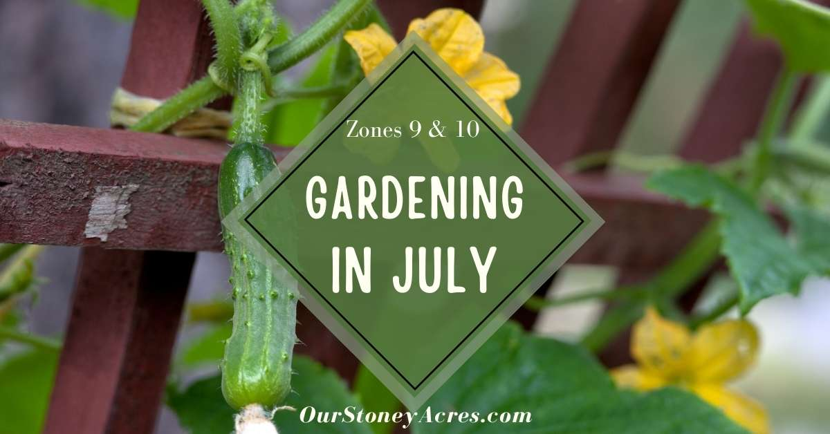 Vegetable Plant Guide for July 9 & 10 FB