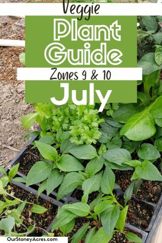 Vegetable Plant Guide for June Zones 9/10