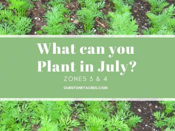 What Can you Plant in July Zones 3 & 4