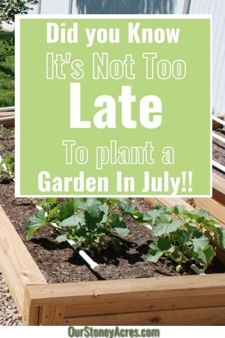 What to Plant in July Zones 56