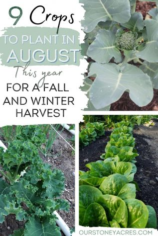 9 Crops to plant In August Zones 5 & 6