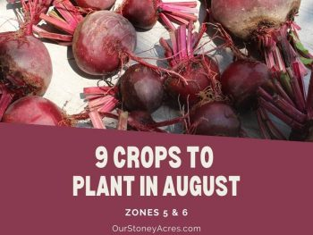 9 Vegetables to plant in August