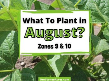 What to plant in August Zones 9 & 10