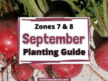 September 7/8 Plant Guide