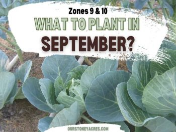 What to Plant in September Zones 9 & 10 (1)