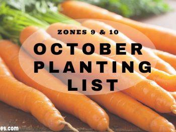 October Planting List Zones 9&10