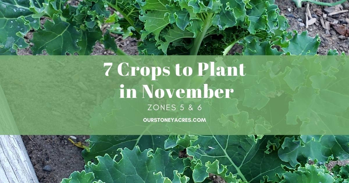 7 Crops to Plant in November