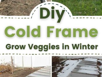 Build your own Cold Frame