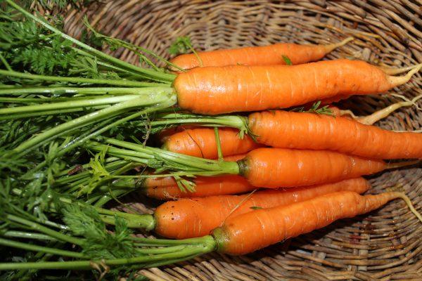 planting carrots in November