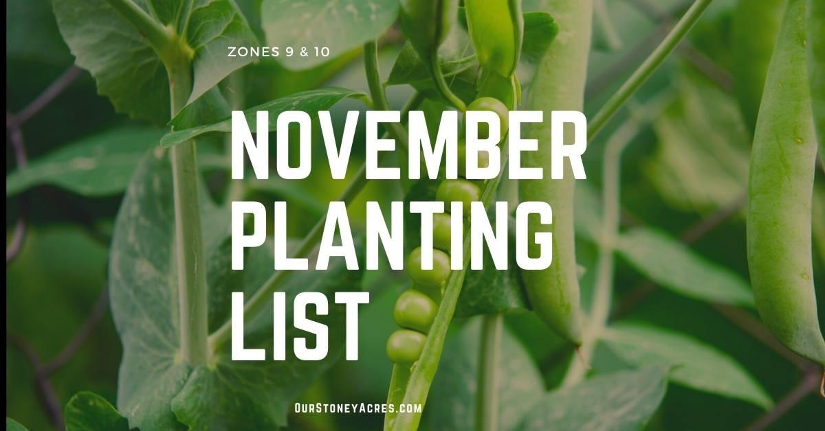 November Planting List Zones 9 & 10