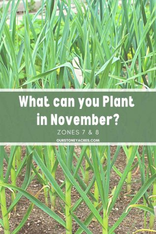 What Can you plant in November zones 7 & 8