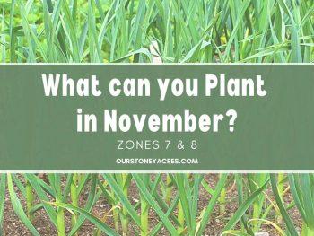 planting in November