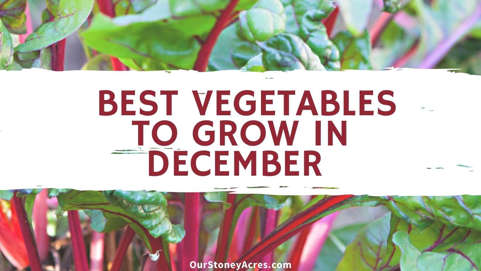 Best Vegetables to Grow in December