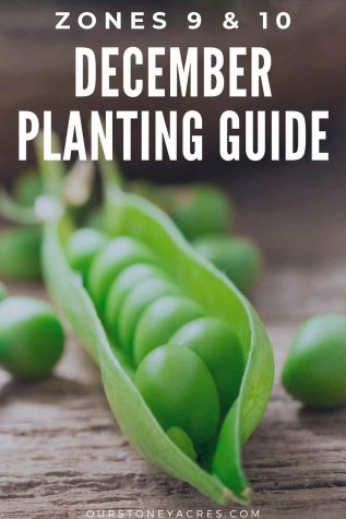 December Planting guide zones 9&10