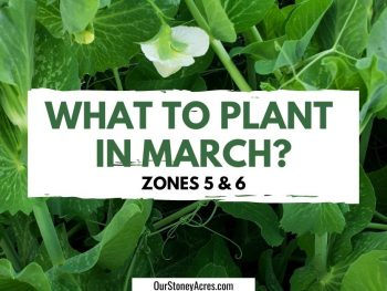 What to Plant in March
