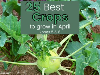 25 Best Crops to Grow in April