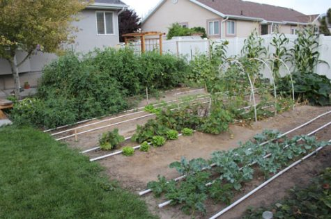 How to start a vegetable garden.