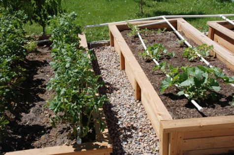 A raised bed vegetable garden is a great alternative to an traditional in ground garden.