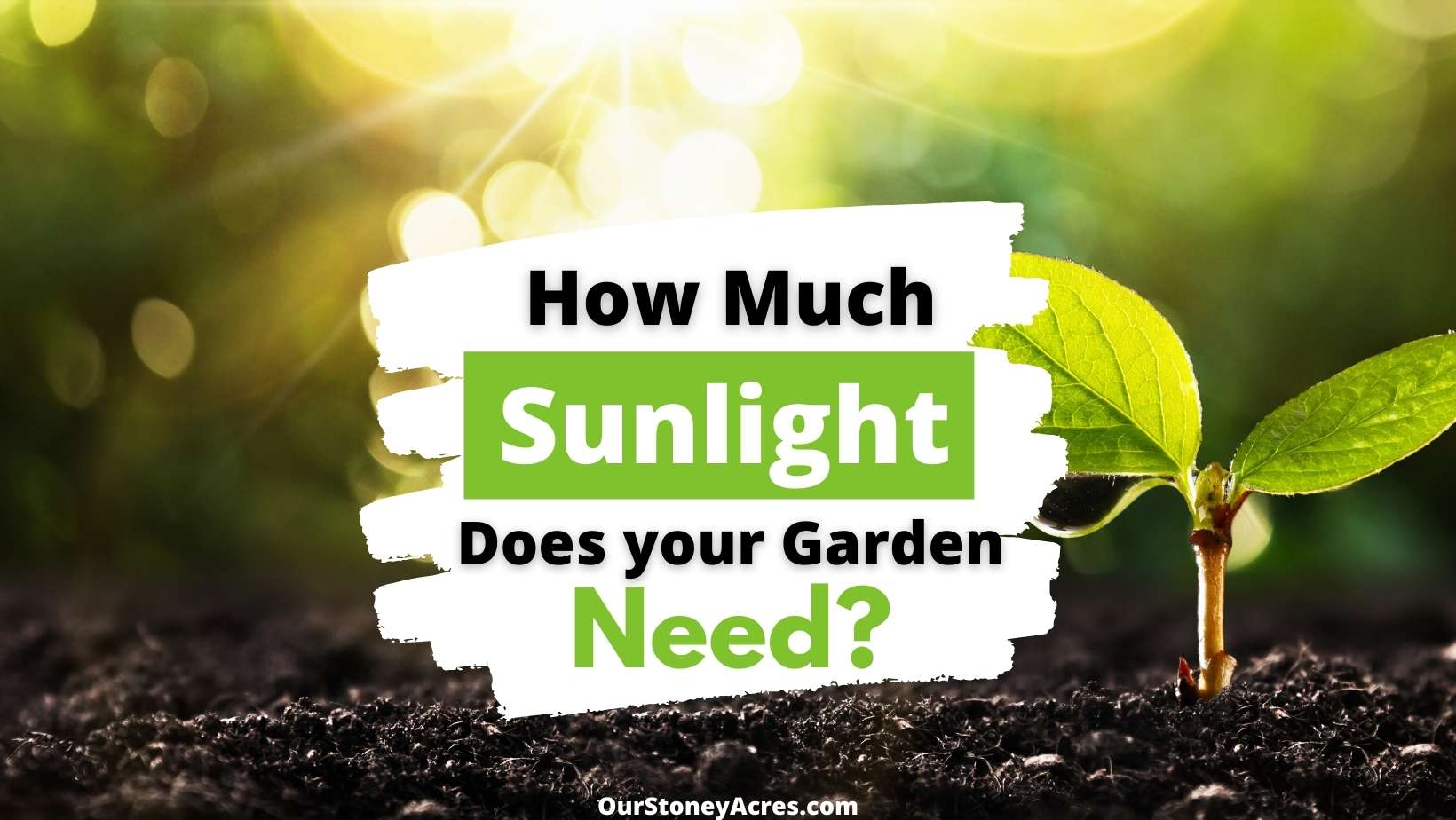 Planting in Full Sun - How much sunlight does your garden need?