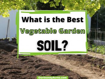Best Vegetable GArden Soil